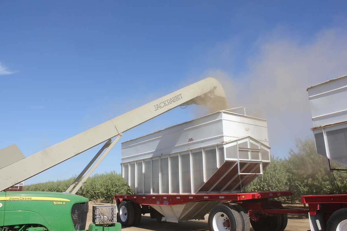 Almonds being loaded for transport