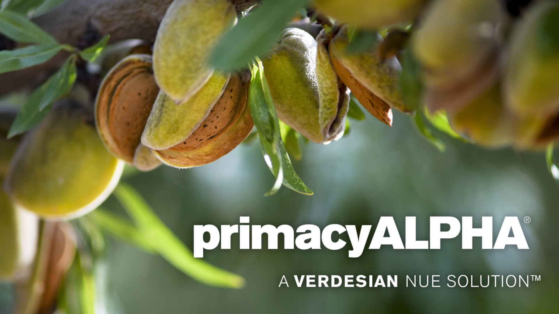 21.0123 Primacy ALPHA 1920×1080 web banner Almond